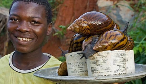 snail farming - snail seller