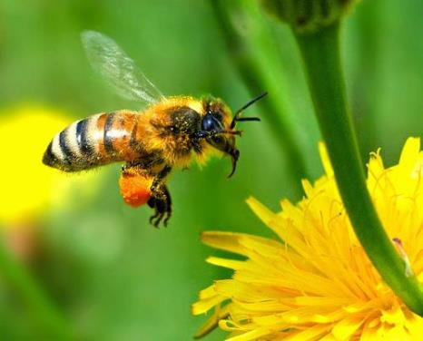beekeeping and honey 5