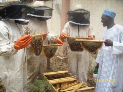 beekeeping and honey 7