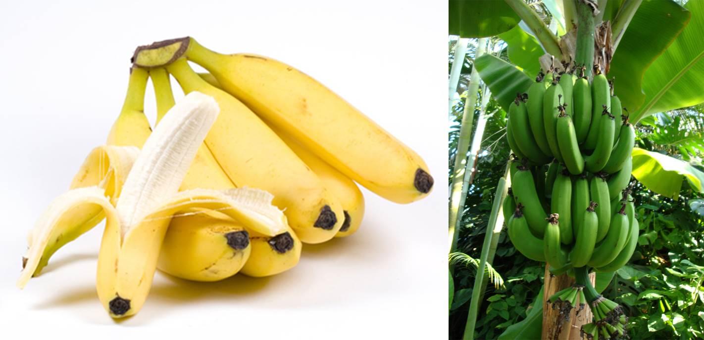 1.fruit farming africa bananas