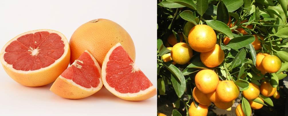 1.fruit farming africa citrus.jpg