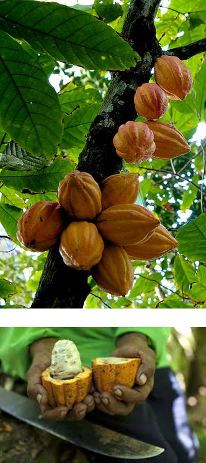 1. Cocoa businesss and the chocolate opportunity 2