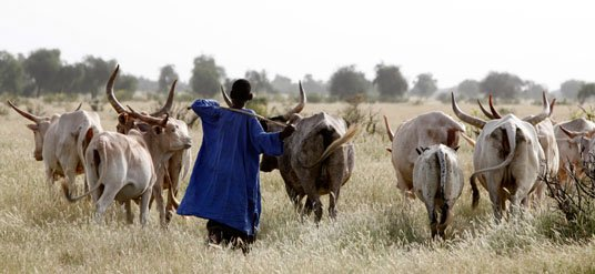 1.1 African milk business opportunity 9
