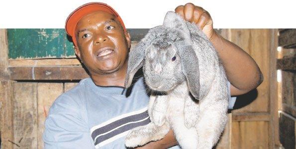 Photo credit: Kenya Rabbit Network