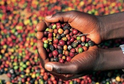 Coffee Business in Africa - Golden opportunity for Africa