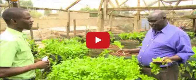 Meet the farmer who plants vegetables in vertical sacks