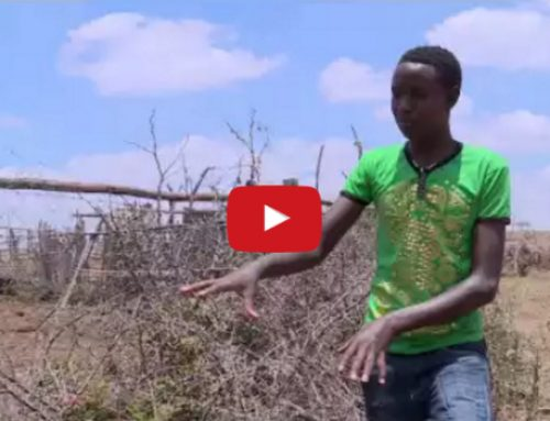 Inspiring Innovation — How this 13-year old invented a solution to protect livestock from lions