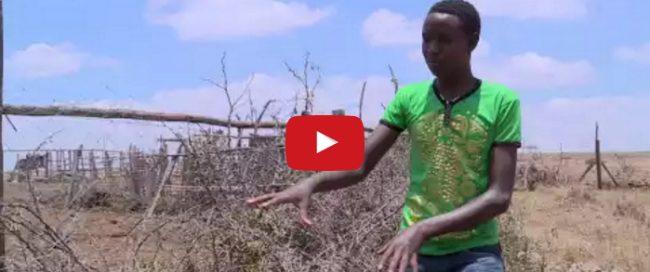 Innovate Africa   Lion Lights   Al Jazeera   YouTube