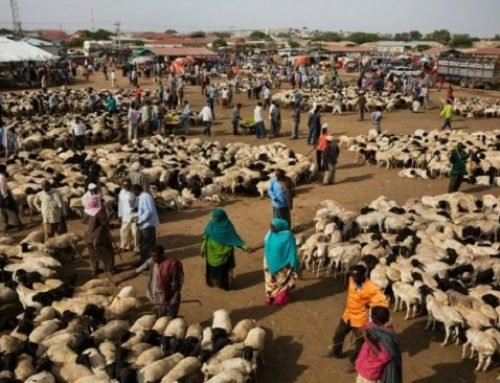 Africa's Top 3 Most Promising Markets for Livestock Business and Investment