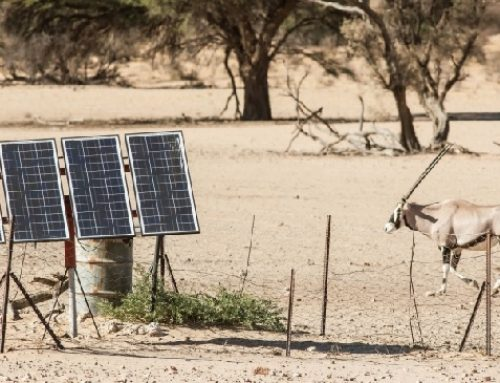 4 Interesting Lessons for Entrepreneurs From Africa's Solar Industry