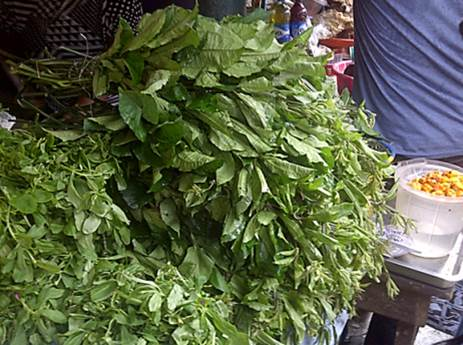 Vegetable farming greens on sale
