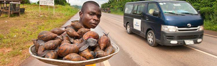 snail farming - road traders