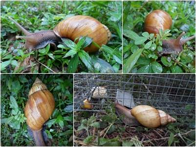 snail farming - sample snail farm