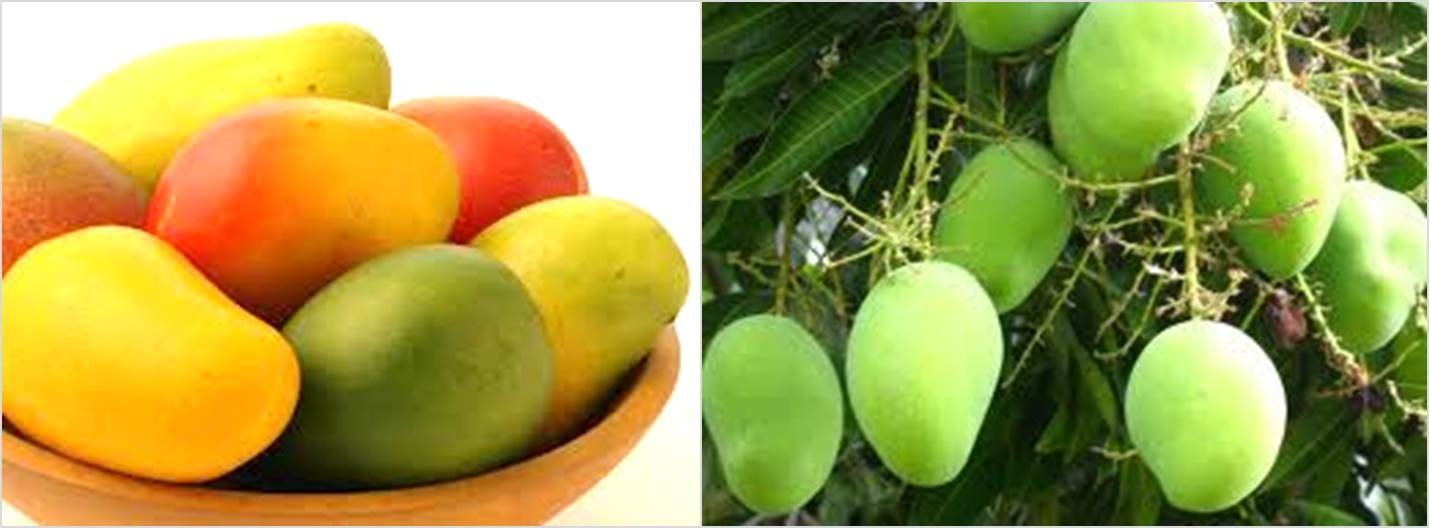 1.fruit farming africa Mangoes
