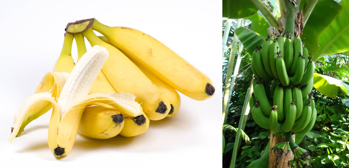 1.fruit farming africa bananas