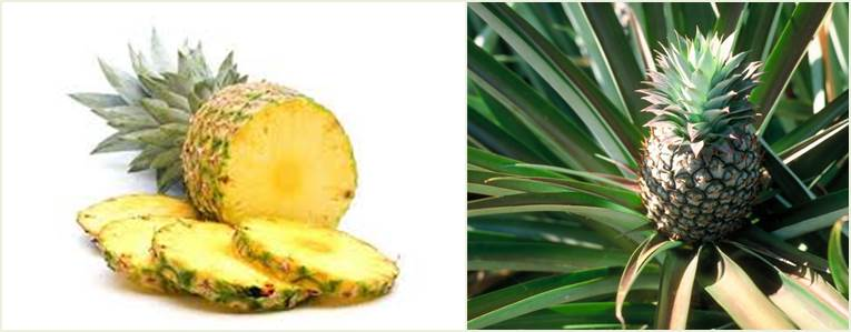 1.fruit farming africa pineapples