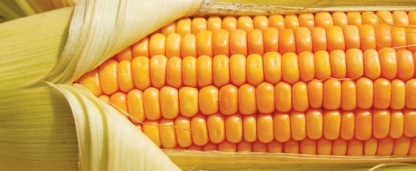 1. 1 Maize farming and production in Africa_4