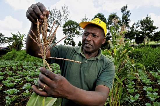 1. 1 Maize farming and production in Africa 5