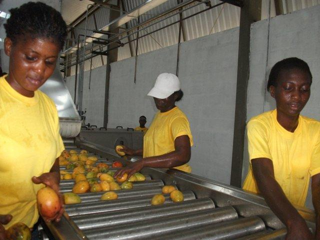 Tropical fruits are one of the untapped business opportunities in Africa