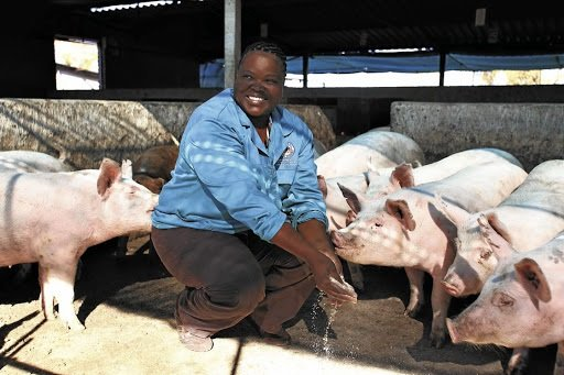 Pig farming is one of the lucrative business opportunities in Africa