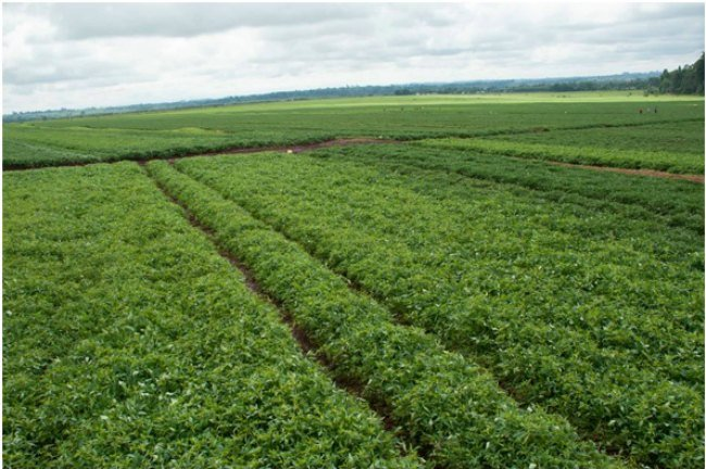 1.1.5 Exciting reasons to consider African agribusiness 1