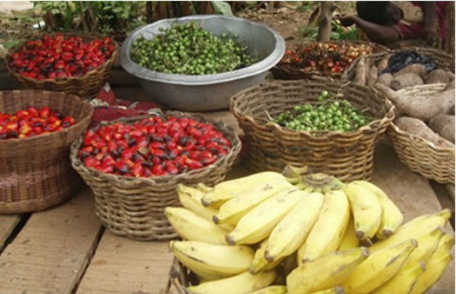 1.1.5 Exciting reasons to consider African agribusiness 2