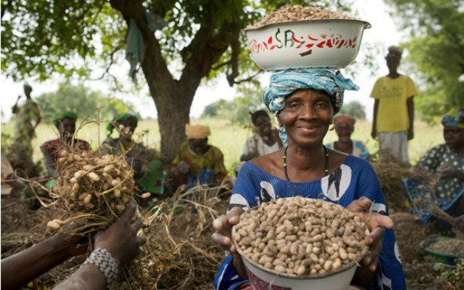 1.1.5 Exciting reasons to consider African agribusiness 4