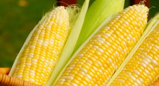 Why Africa is Poor - Top 3 Grains That Empty Africa's Pockets - Corn