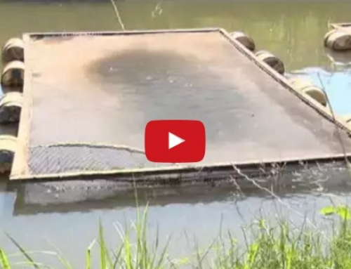 Fish Farming in Cages – An interesting and lucrative concept from Kenya