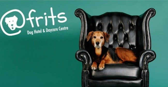 Pet business in Africa - AtFritz