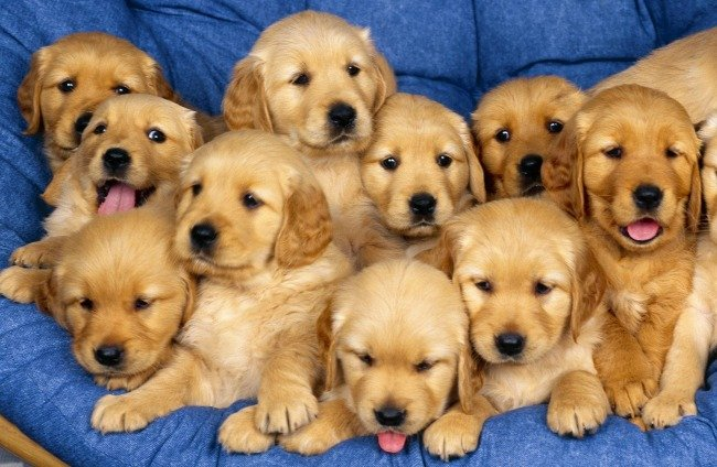 Pet business in Africa - dog breeders