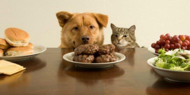 Pet business in Africa - pet food