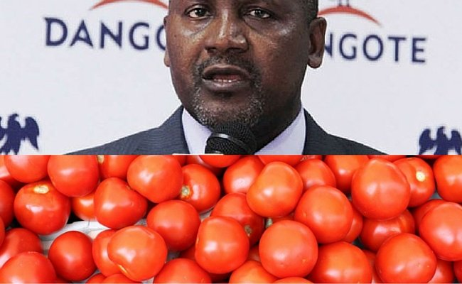 Tomato Business in Africa - Dangote