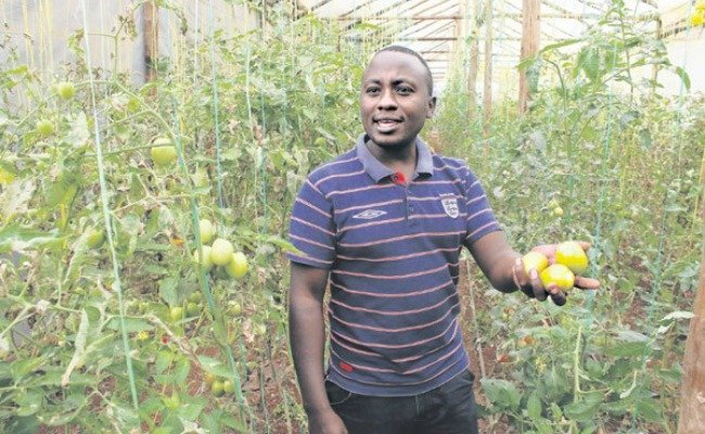 Tomato Business in Africa - Kingori Mathenge