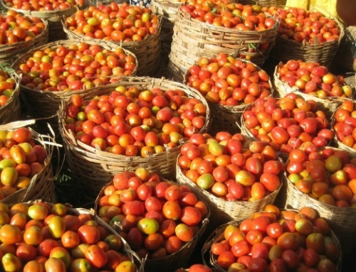 Tomato Millionaires In The Making: How These 4 Smart Entrepreneurs Are Making Money from Africa's Tomato Problems