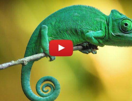 Chameleon farming in Kenya – This exotic business will literally blow your mind!